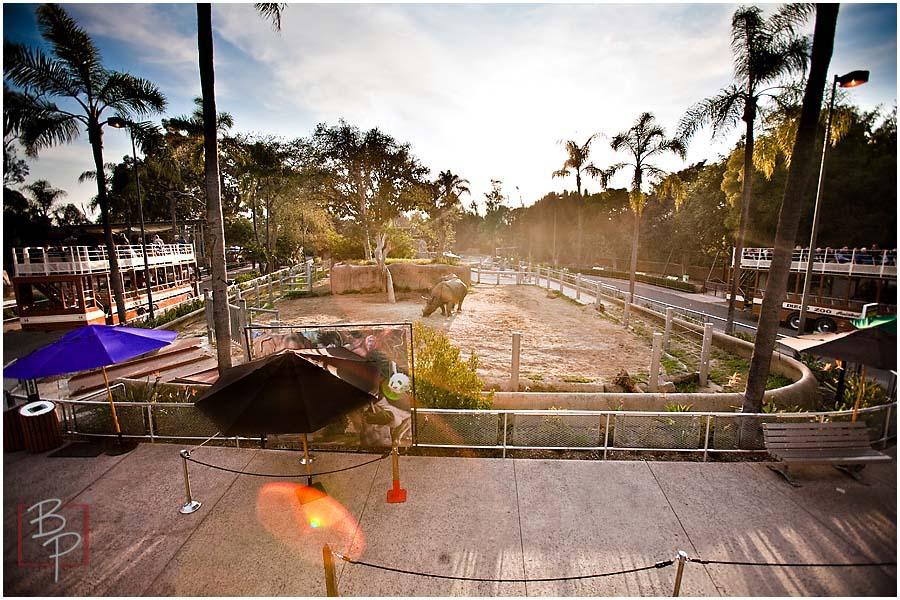 San Diego Zoo Rhinoceros