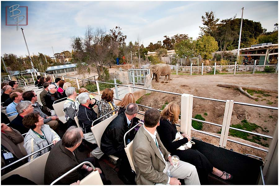 Employees on San Diego Zoo Tour Bus looking at Elephant