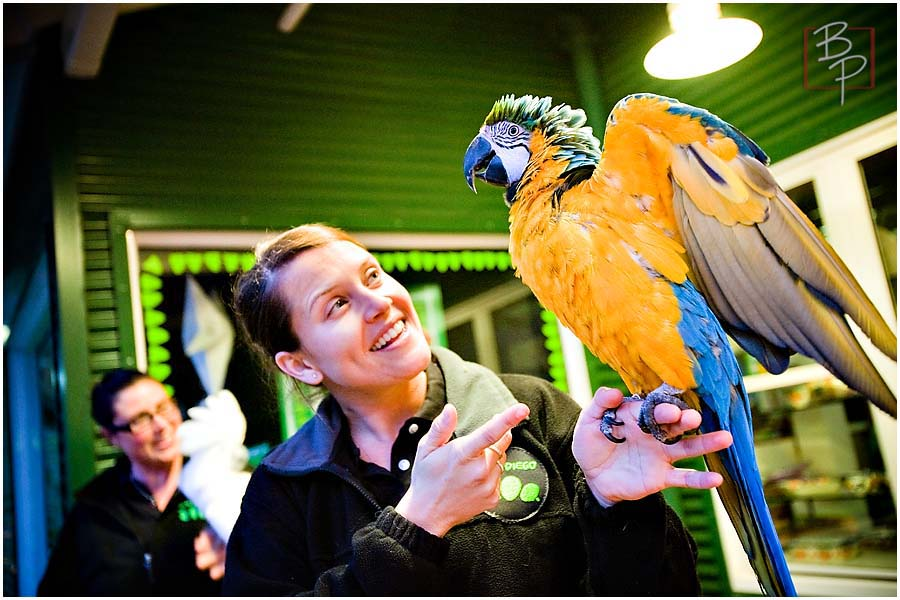 San Diego Zoo  Parrot